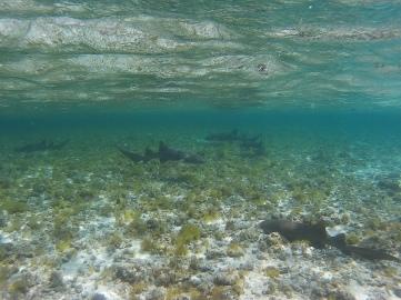 Los Tiburones - Cayo Bolivar
